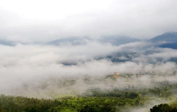 Borneo Lowland Rainforest Indonesia