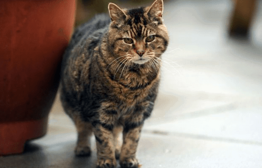 Lucy   Petmondo   fotos de gatos viejos