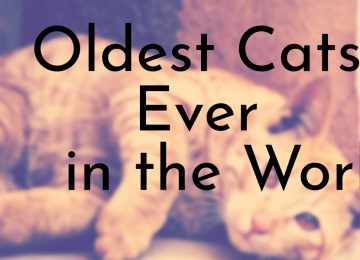 Oldest Cats Ever in the World