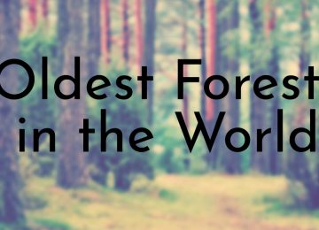 Oldest Forests in the World