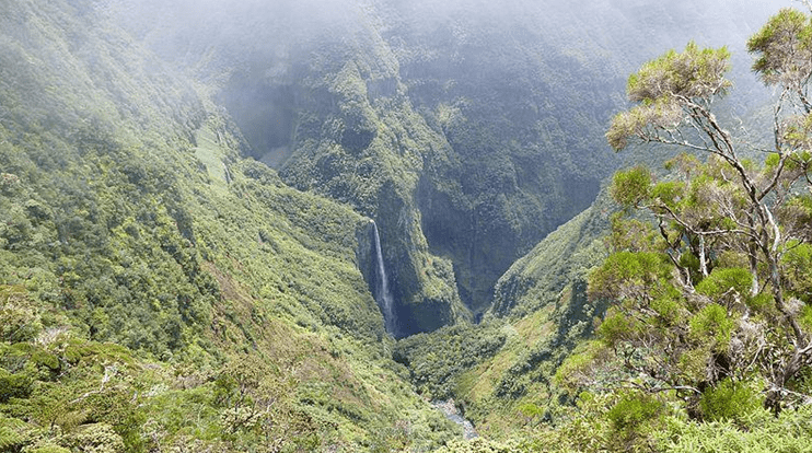 Réunion National Forest, Madagascar