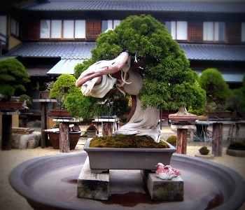 Bonsai Trees at Shunkaen Nursery