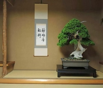 Bonsai Trees At Shunkaen Nursery Photo Source Bonsaiempire