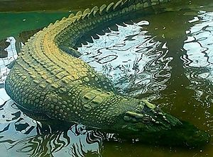8 Oldest Crocodiles in The World | Oldest.org