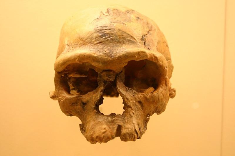 Jebel Irhoud Skulls