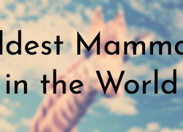 Oldest Mammals in the World