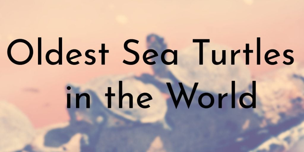Oldest Sea Turtles in the World