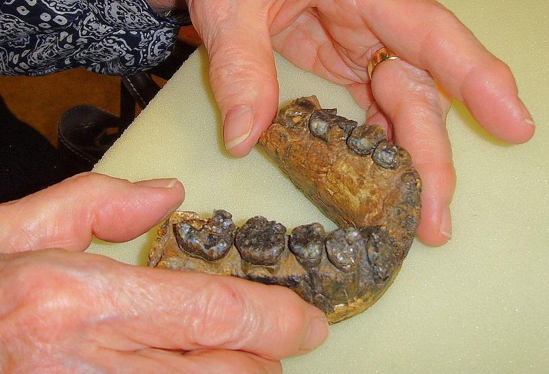 UR 501 Jawbone