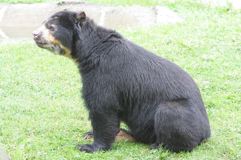 Binghamton Zoo at Ross Park