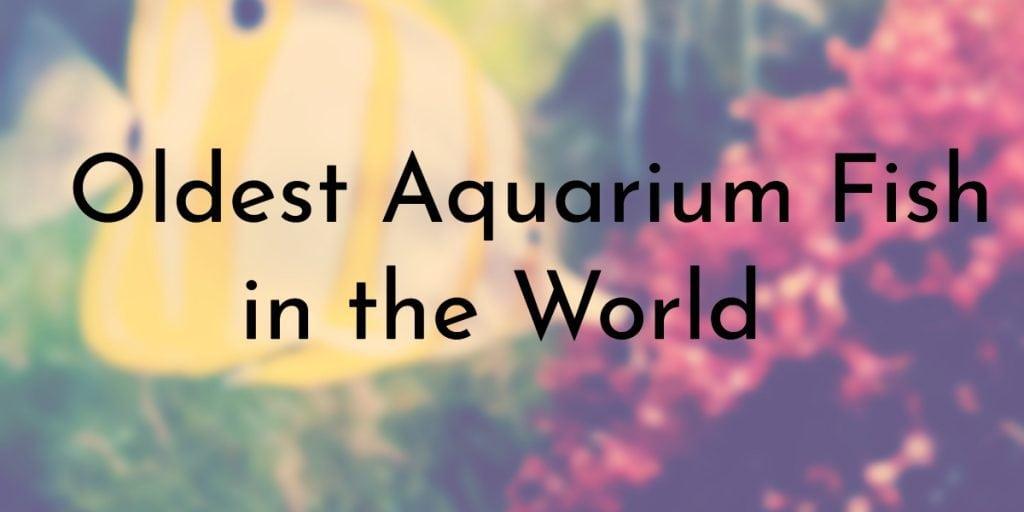 Oldest Aquarium Fish in the World