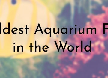 Oldest Aquarium Fish in the World