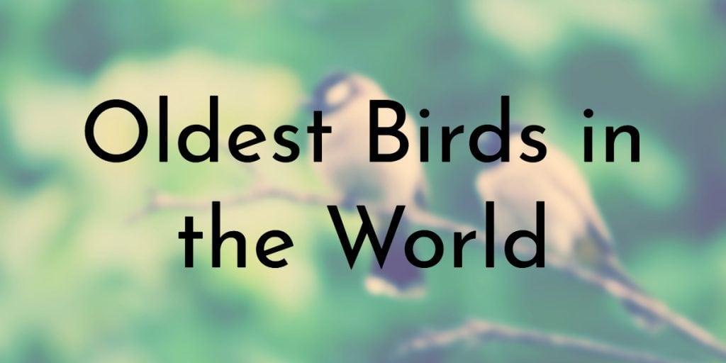 Oldest Birds in the World