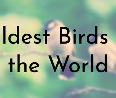 Oldest Birds in the World