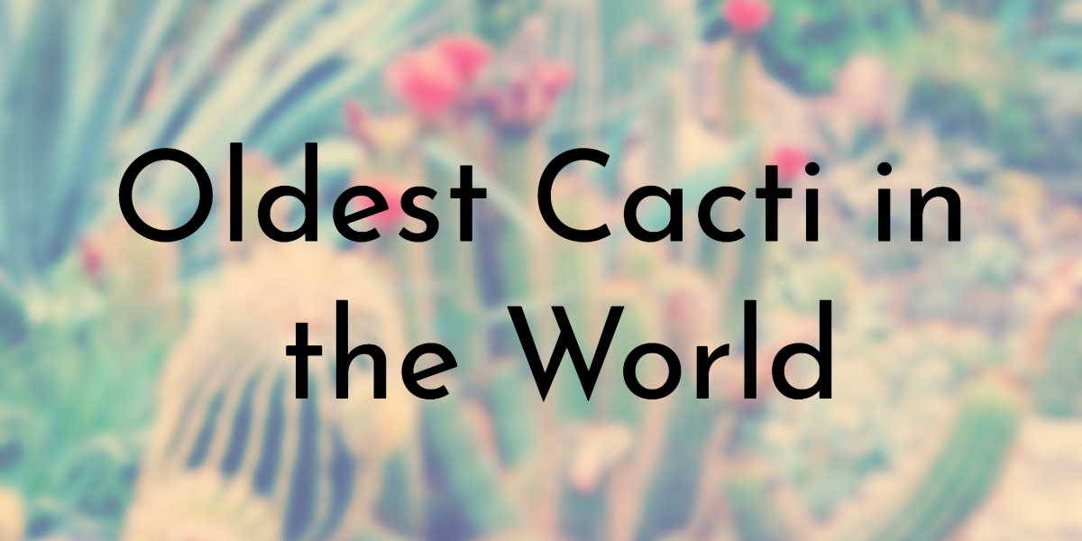 Oldest Cacti in the World