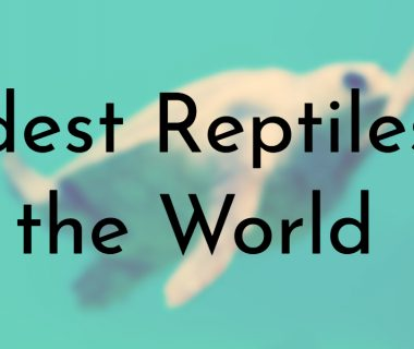 Oldest Reptiles in the World