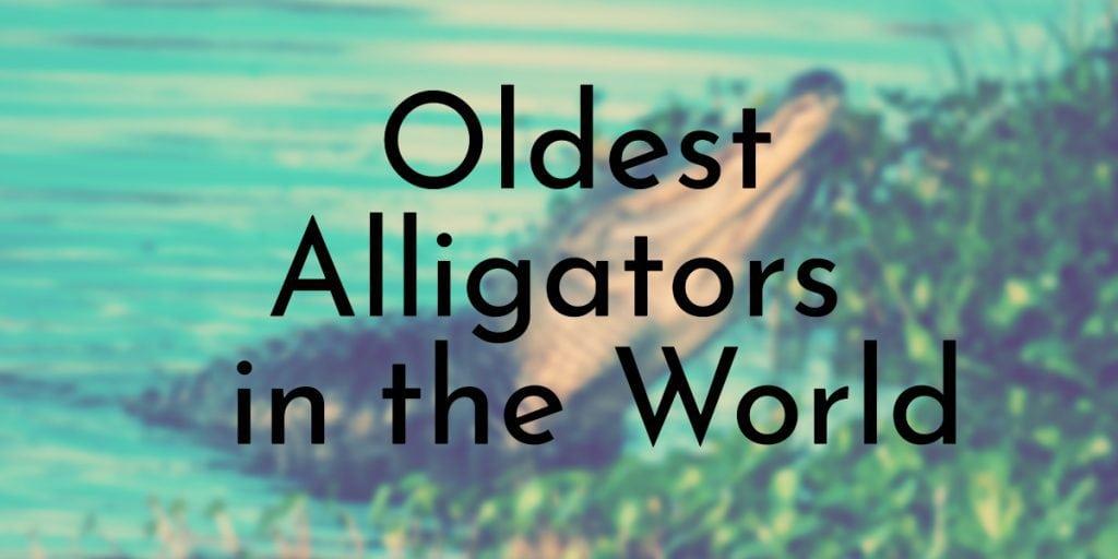 oldest alligators in the world