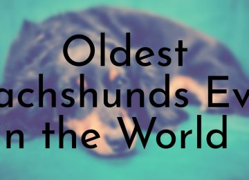 Oldest Dachshunds Ever in the World