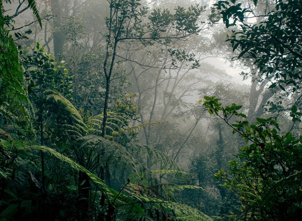 Borneo Lowland Rainforest
