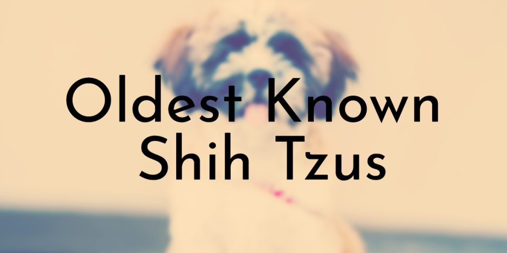 Oldest Known Shih Tzus
