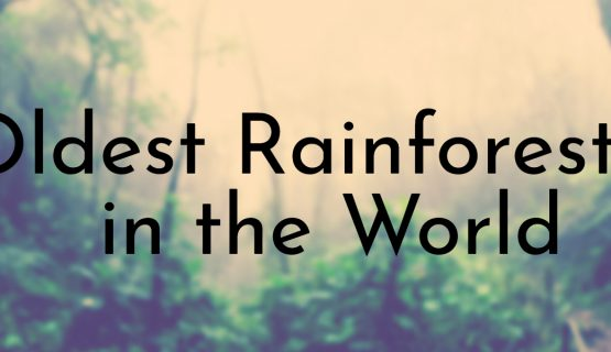 Oldest Rainforests in the World