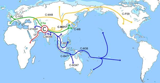 Haplogroup C