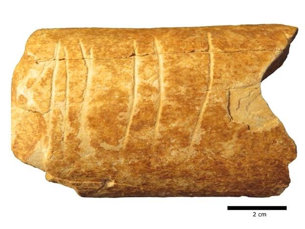 Ramle Bone Fragments