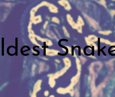 Oldest Snakes